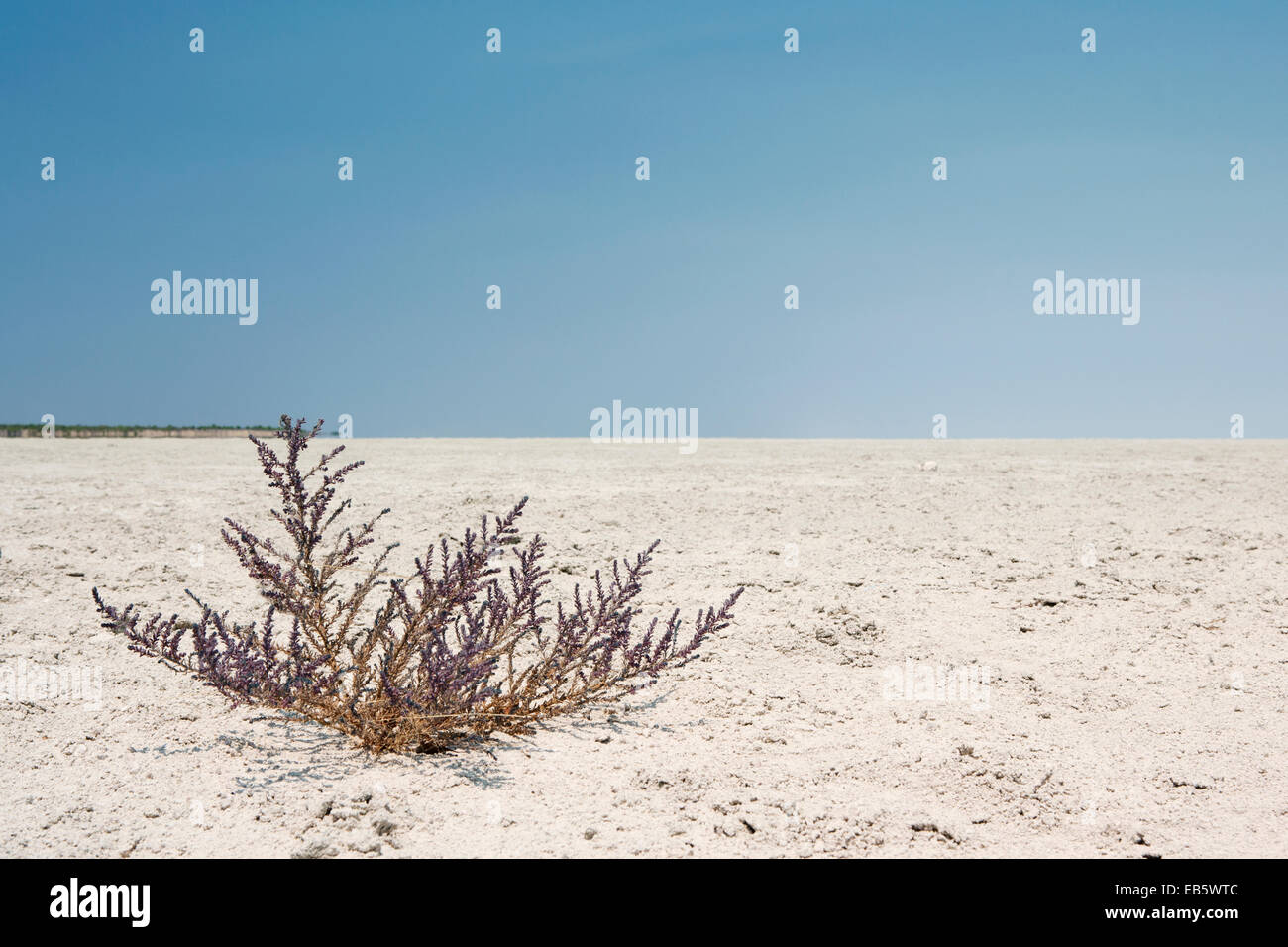 Sparse Vegetation in Etosha Pan - Etosha National Park - Namibia, Africa - Stock Image