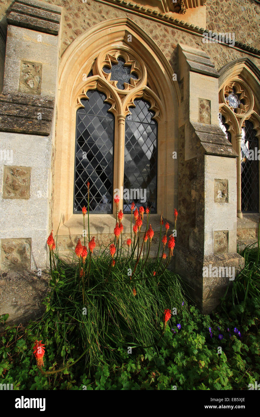 Red Hot Poker is a perennial that can remain in the same spot for several years, Priory window position protected - Stock Image