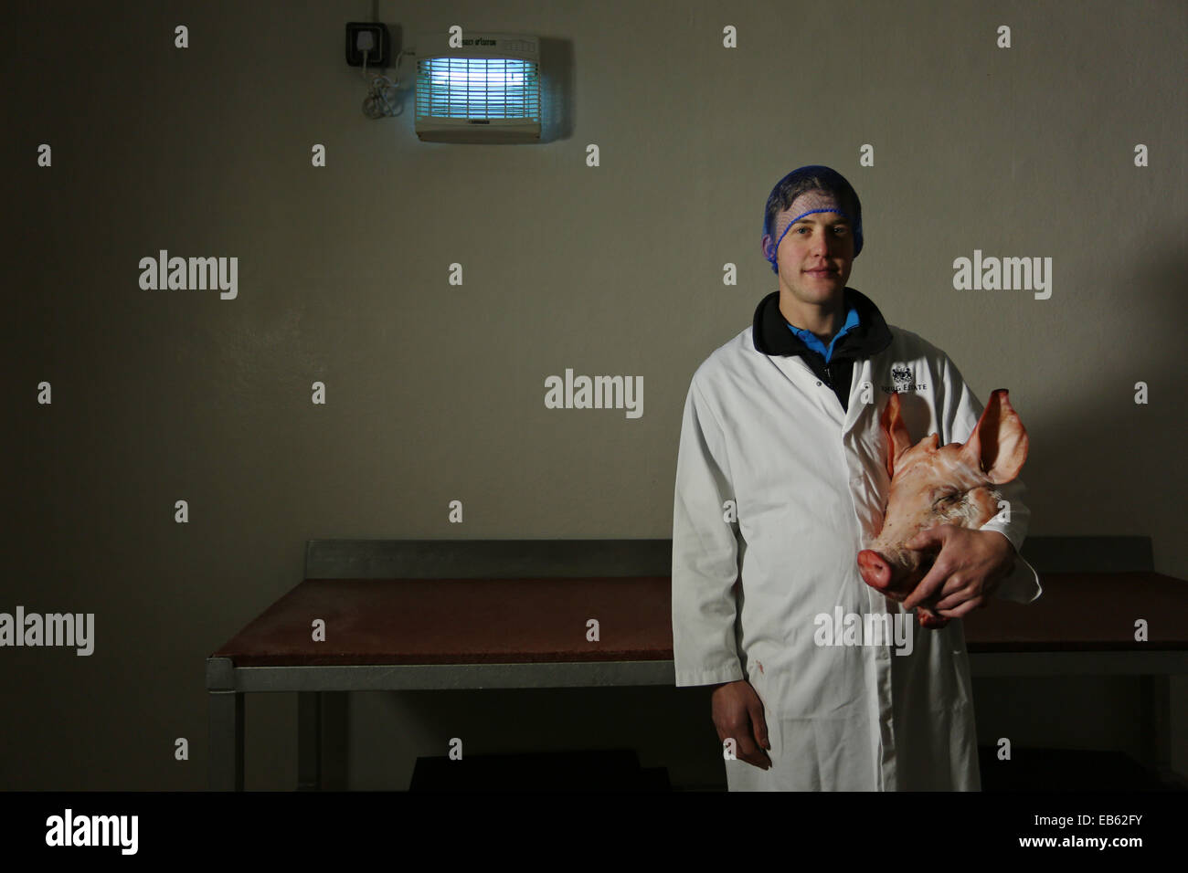 Butcher displays a butchered pigs head in packing area of abattoir. - Stock Image