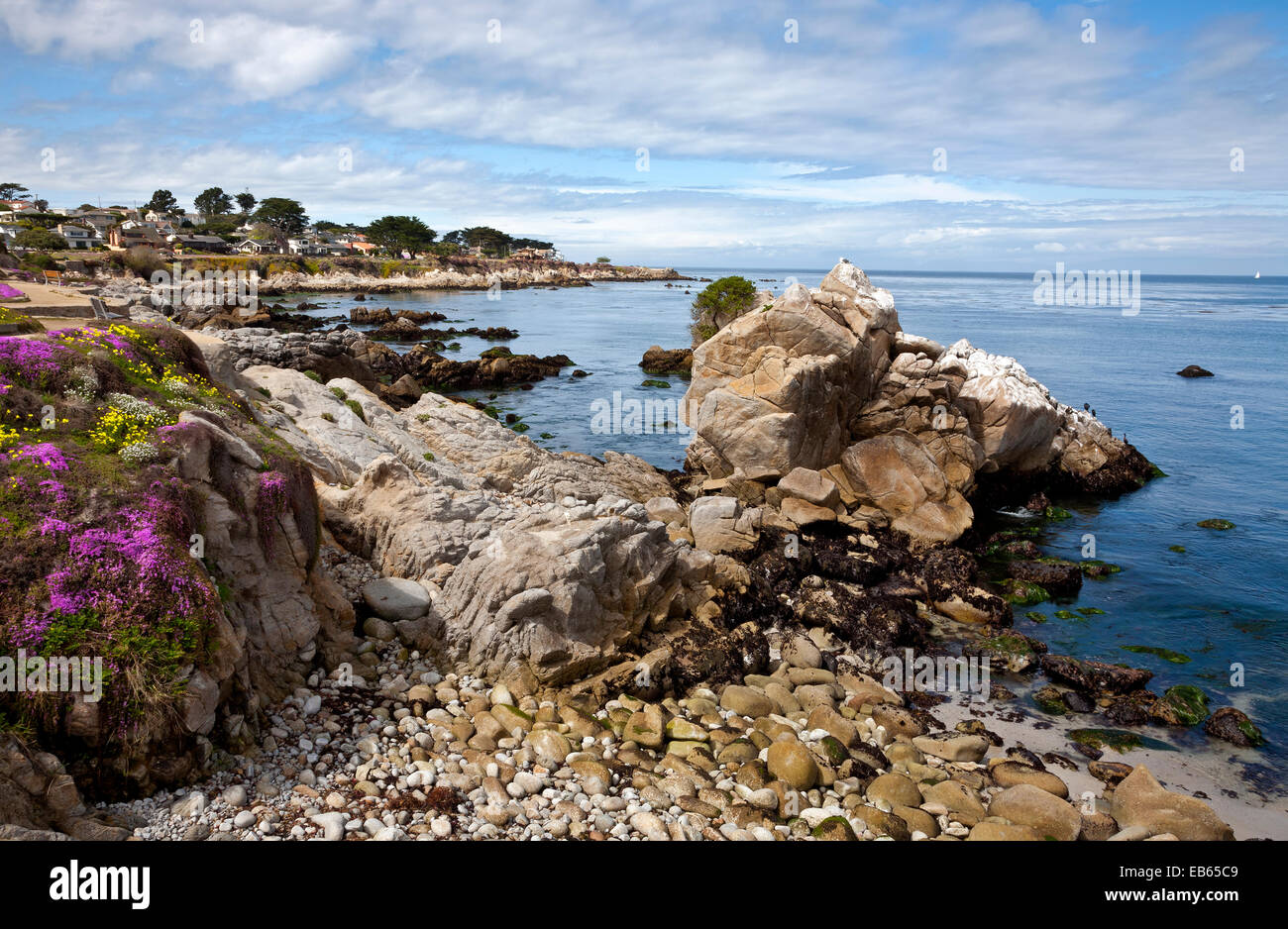 CA02416-00...CALIFORNIA - Colorful flowers blooming along the Monterey waterfront on the shores of Monterey Bay. - Stock Image