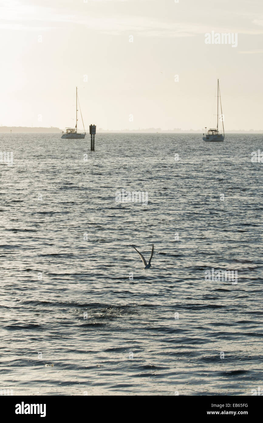 Two sailboats anchored in the Manatee River - Stock Image