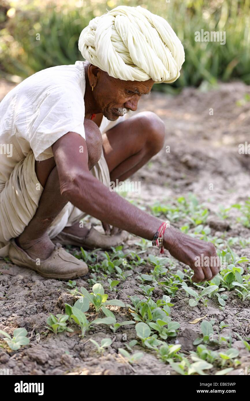 Old Indian Man Gardening High Resolution Stock Photography And Images Alamy