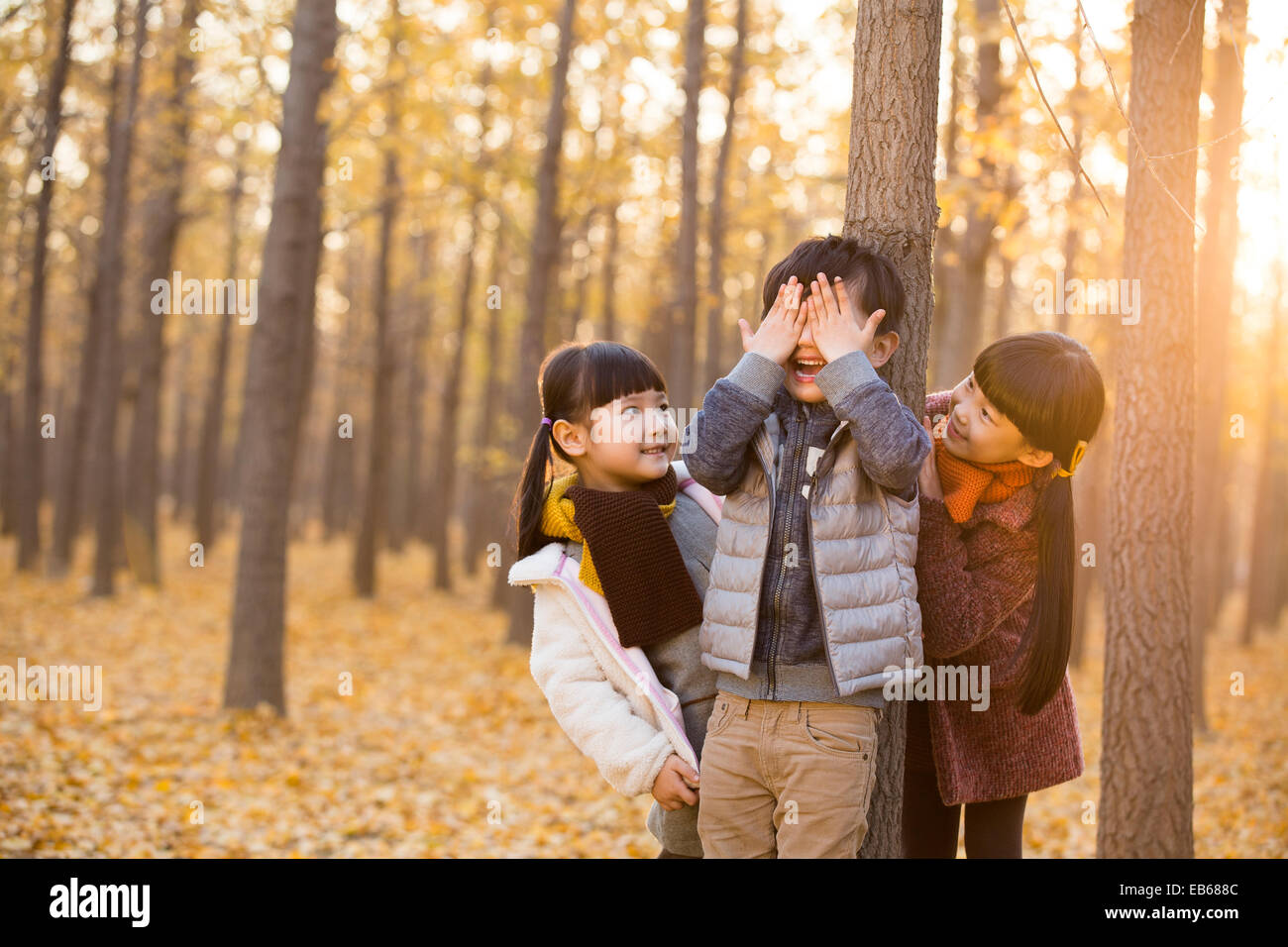 Three children playing hide and seek in autumn woods - Stock Image