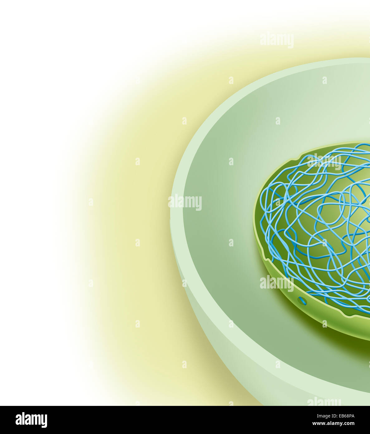 PLANT CELL, DRAWING - Stock Image