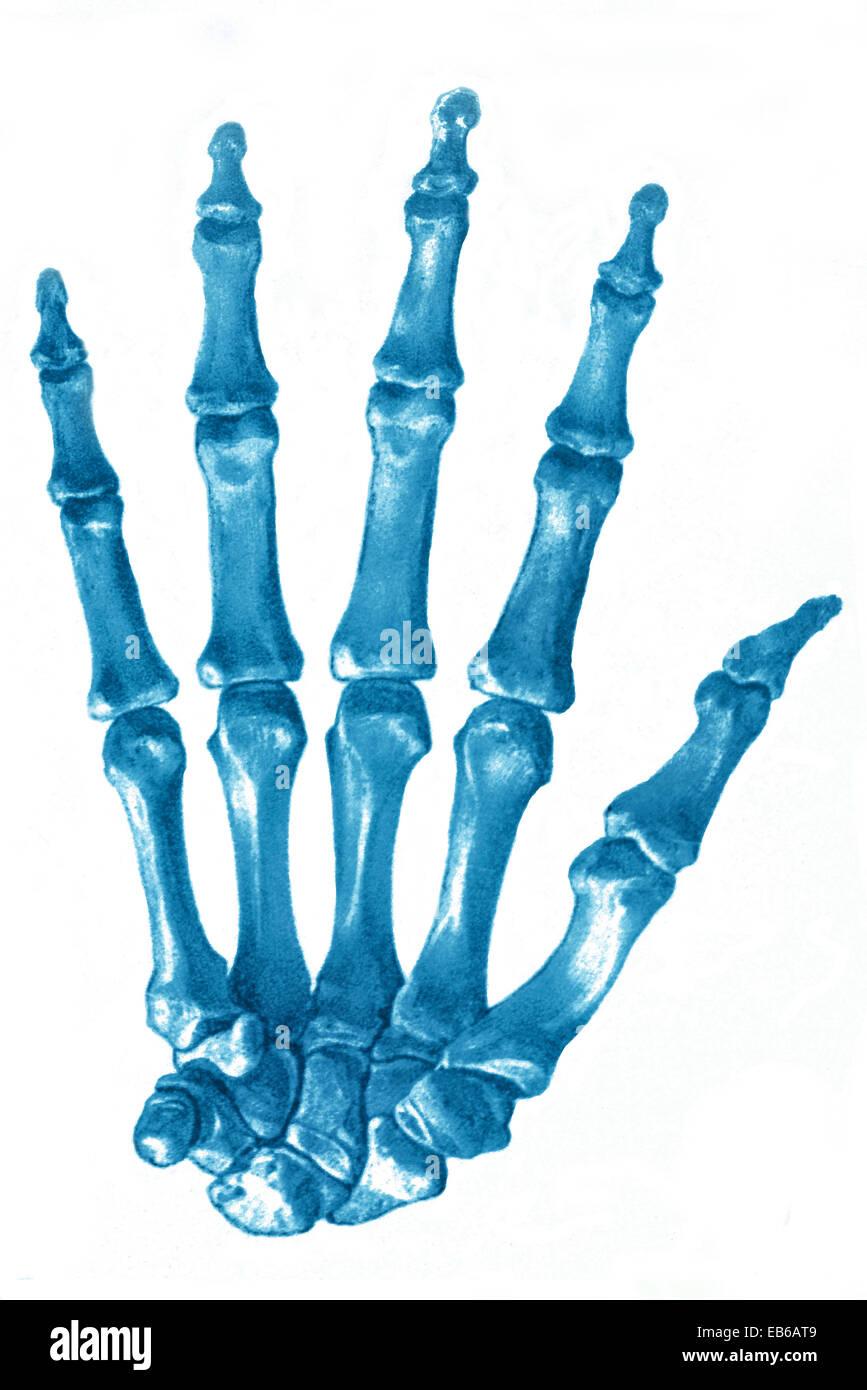 HAND, ILLUSTRATION - Stock Image