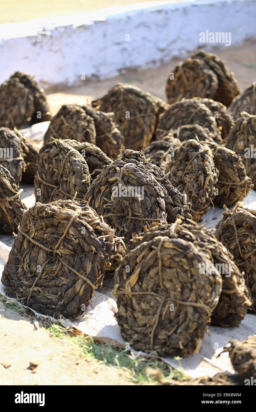 Drying tobacco leaves Rajasthan India - Stock Image