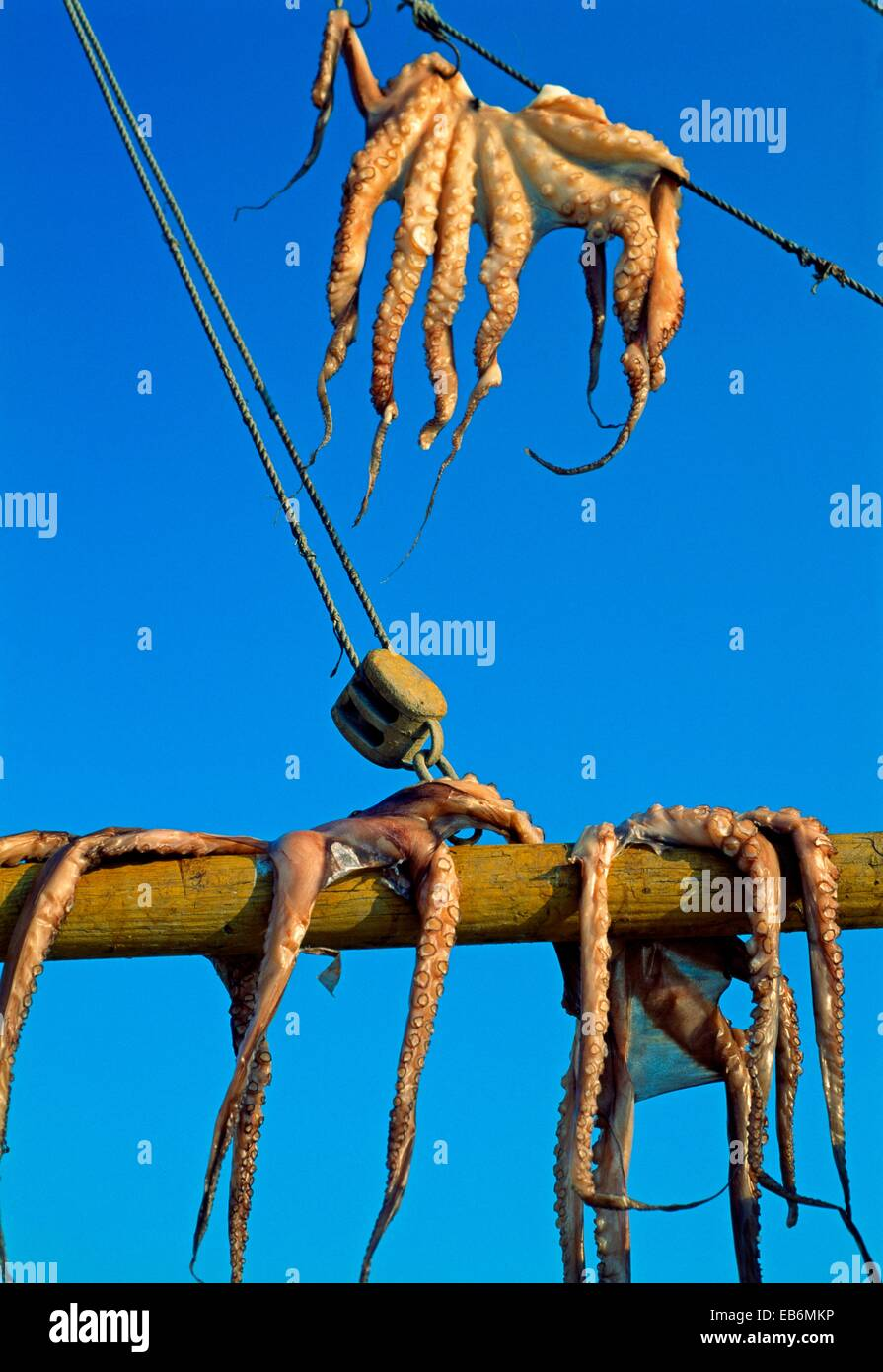 Octopus Drying Stock Photos & Octopus Drying Stock Images - Page 5 ...