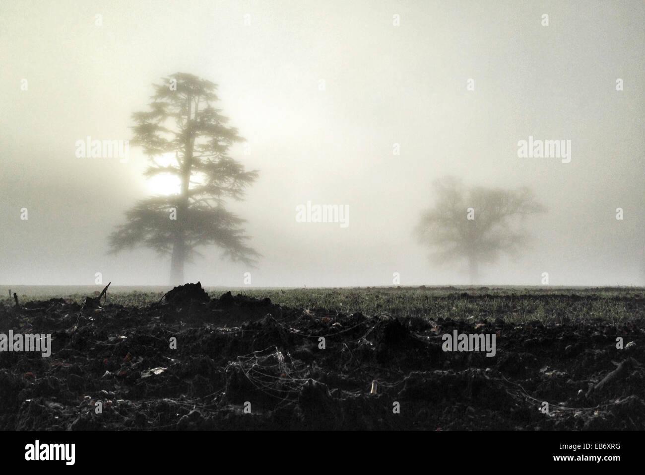 Dunchideock, Devon, UK. 27th November, 2014. UK weather. Pockets of thick fog blanket walkers and trees in Dunchideock, - Stock Image