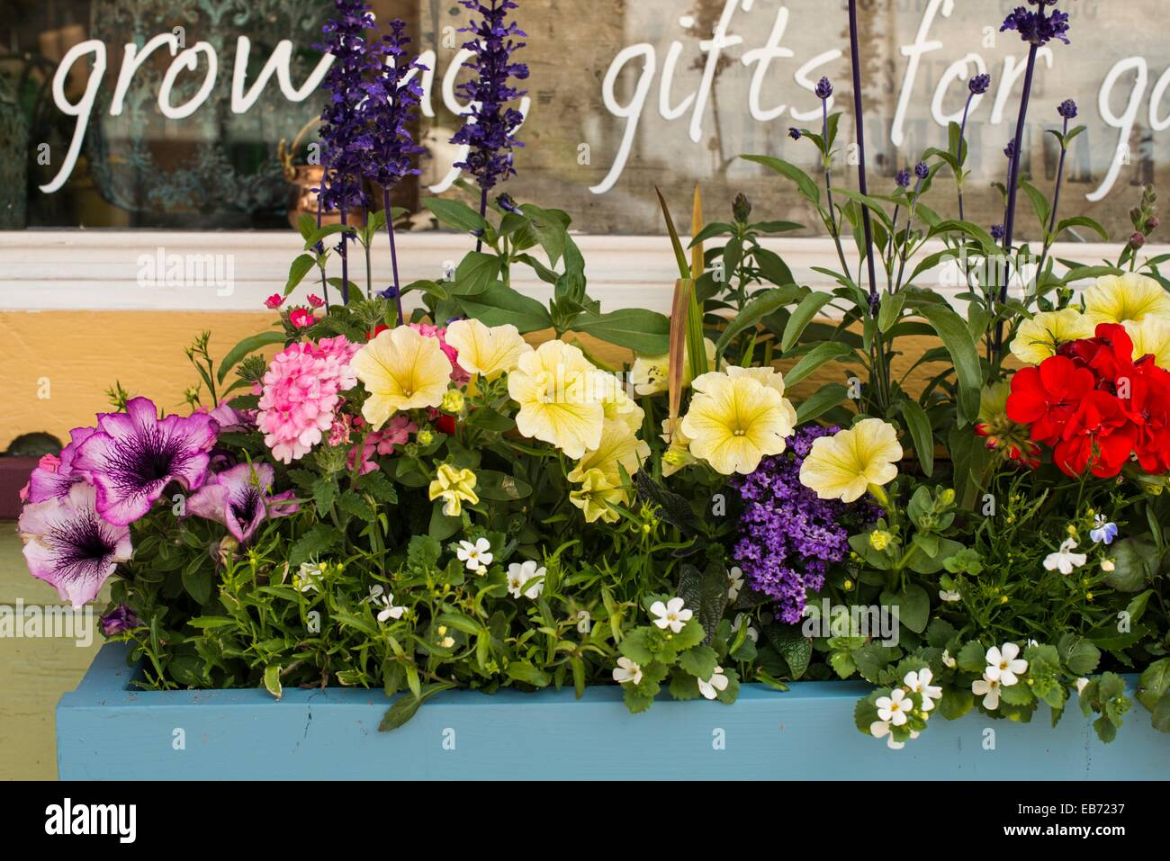 A Window Box Planter With Flowers Outside A Garden Shop In Ladner, BC,  Canada.