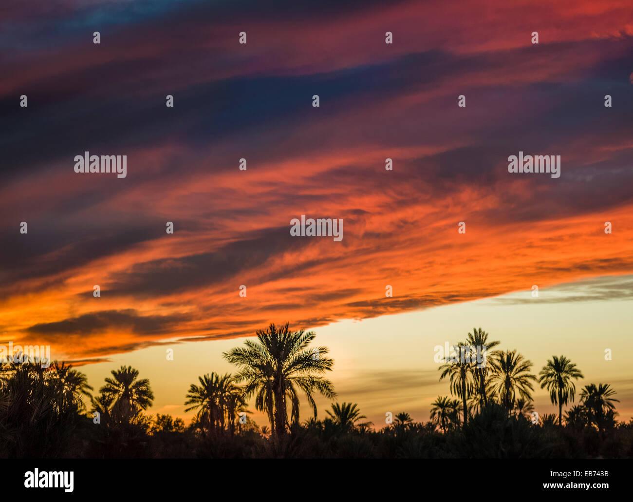 SUNSET TAFILALT PALM GROVE  RISSANI MOROCCO - Stock Image