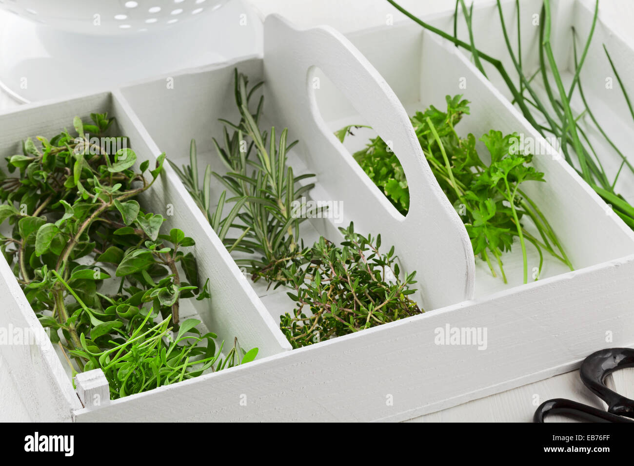 Fresh cut garden herbs (marjoram, cress, rosemary, thyme, parsley, chives) in white wooden box on kitchen table - Stock Image