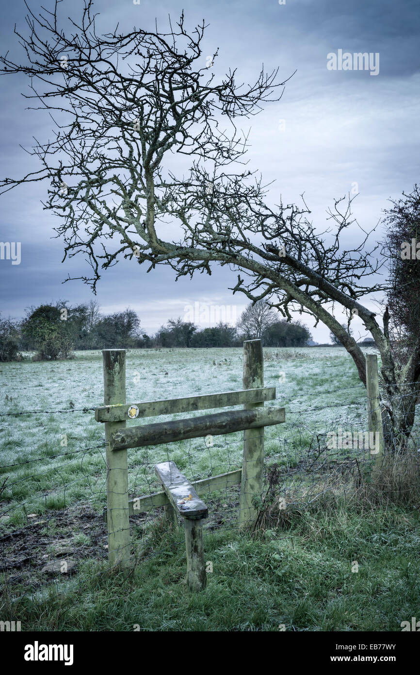 A weather beaten tree bends over a stile that leads to a frosty field in Gloucestershire. - Stock Image