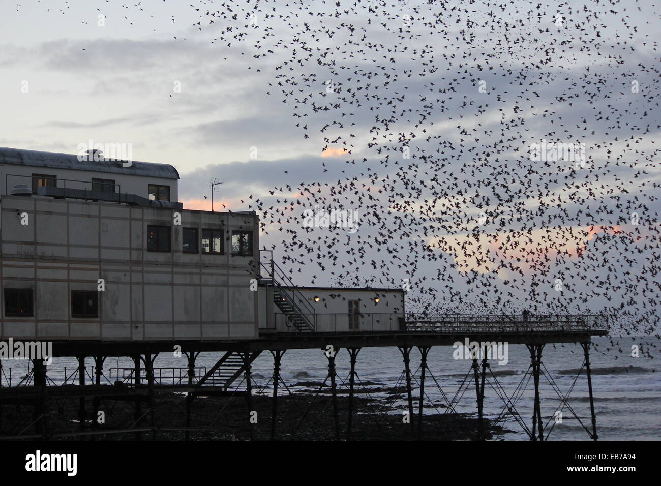 Aberystwyth Wales. A murmuration of starlings return to roost on the pier at sundown. - Stock Image