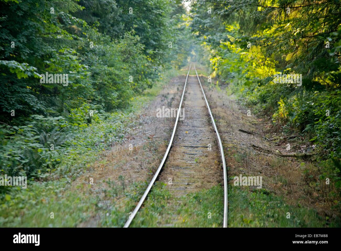 A rail line going through the forest on Vancouver Island - Stock Image