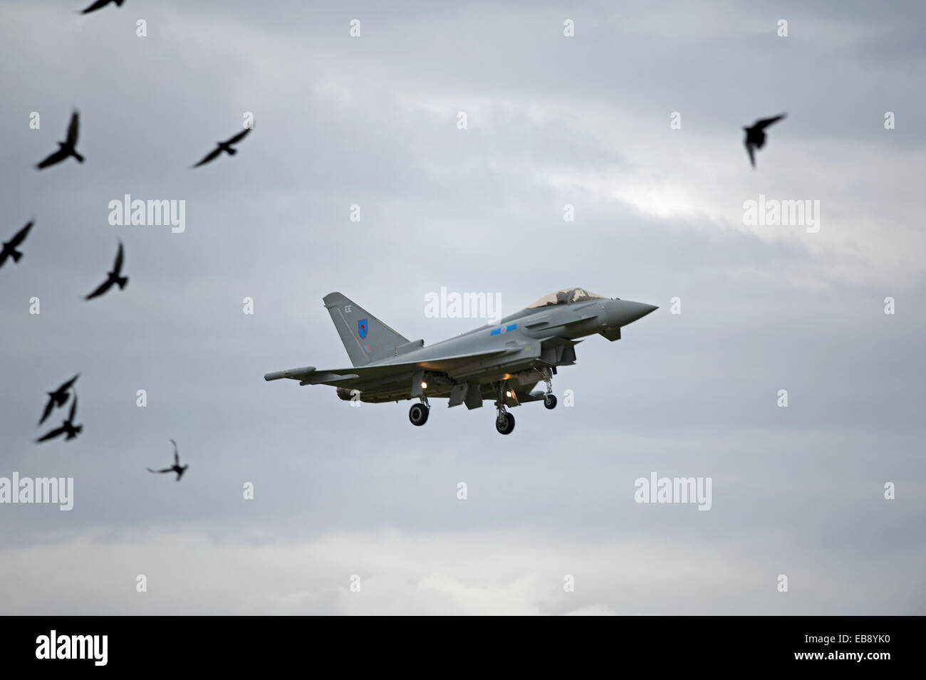 Eurofighter Typhoon FRG4 Military Jet Fighter avoiding bird strike on returning to base at RAF Lossiemouth.  SCO - Stock Image