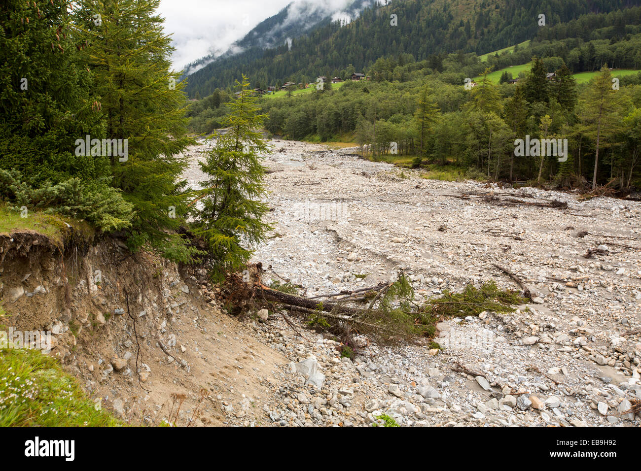 Trees knocked over by flash flooding below La Fouly in the Swiss Alps, in Val Ferret. Stock Photo