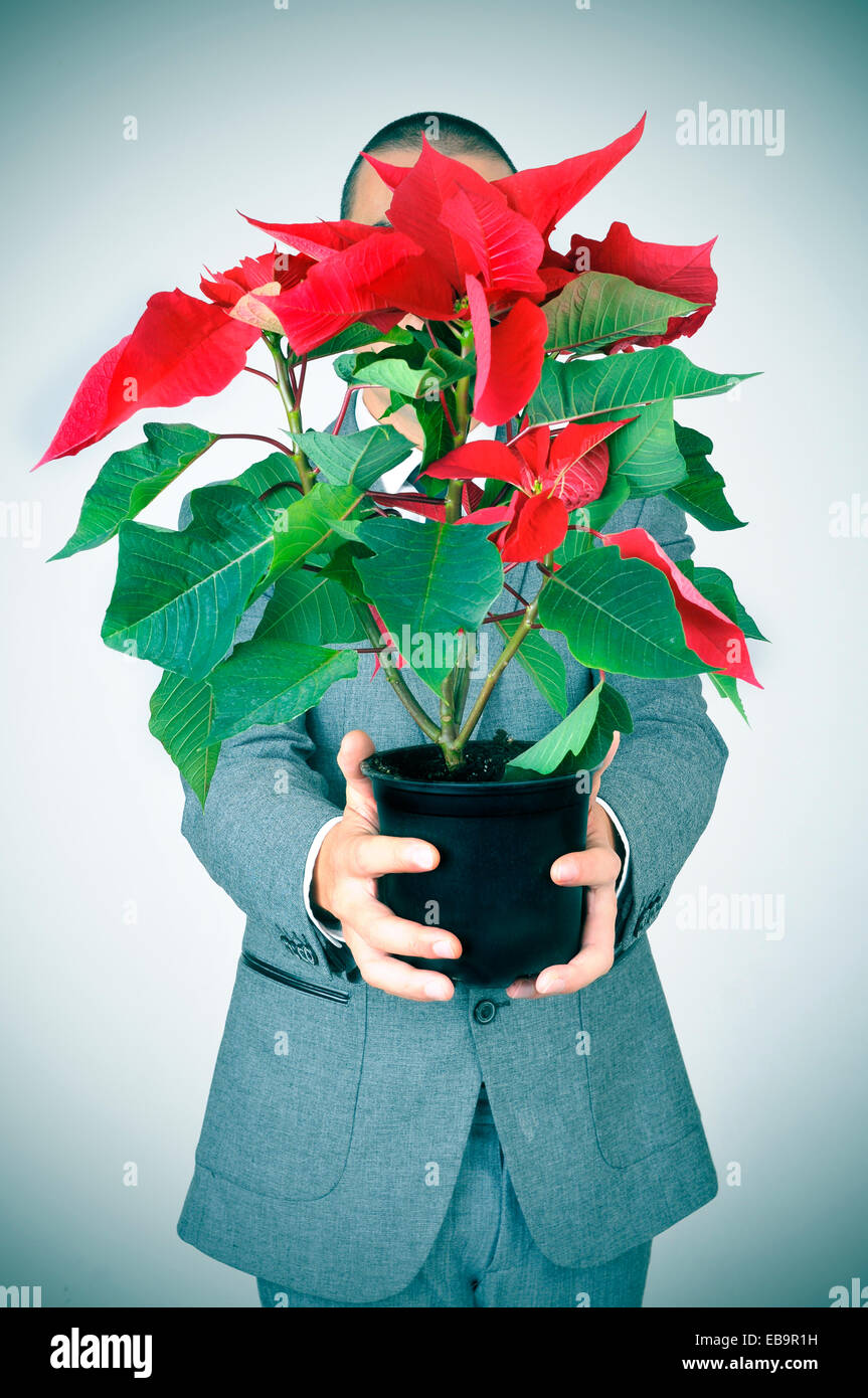 a young man in suit bringing a poinsettia plant to the observer - Stock Image