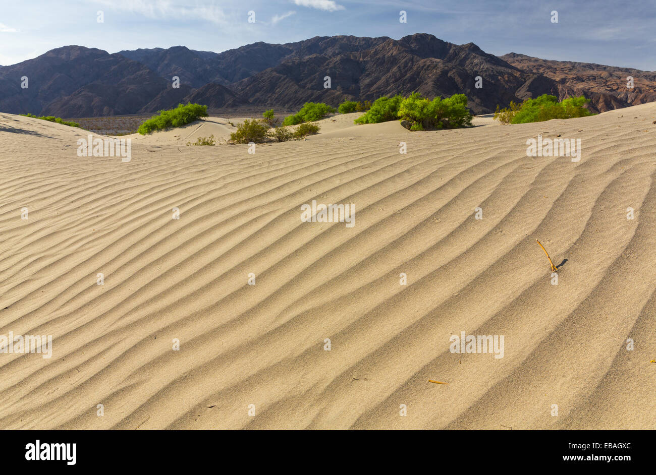 Mesquite Flat Sand Dunes Death Valley National Park California USA America. - Stock Image