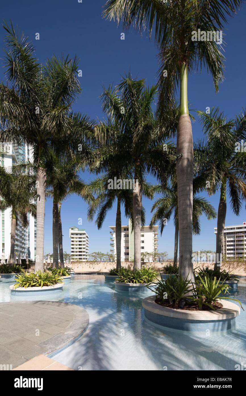 Pool palm trees at Four Seasons, Miami, Florida, USA Stock