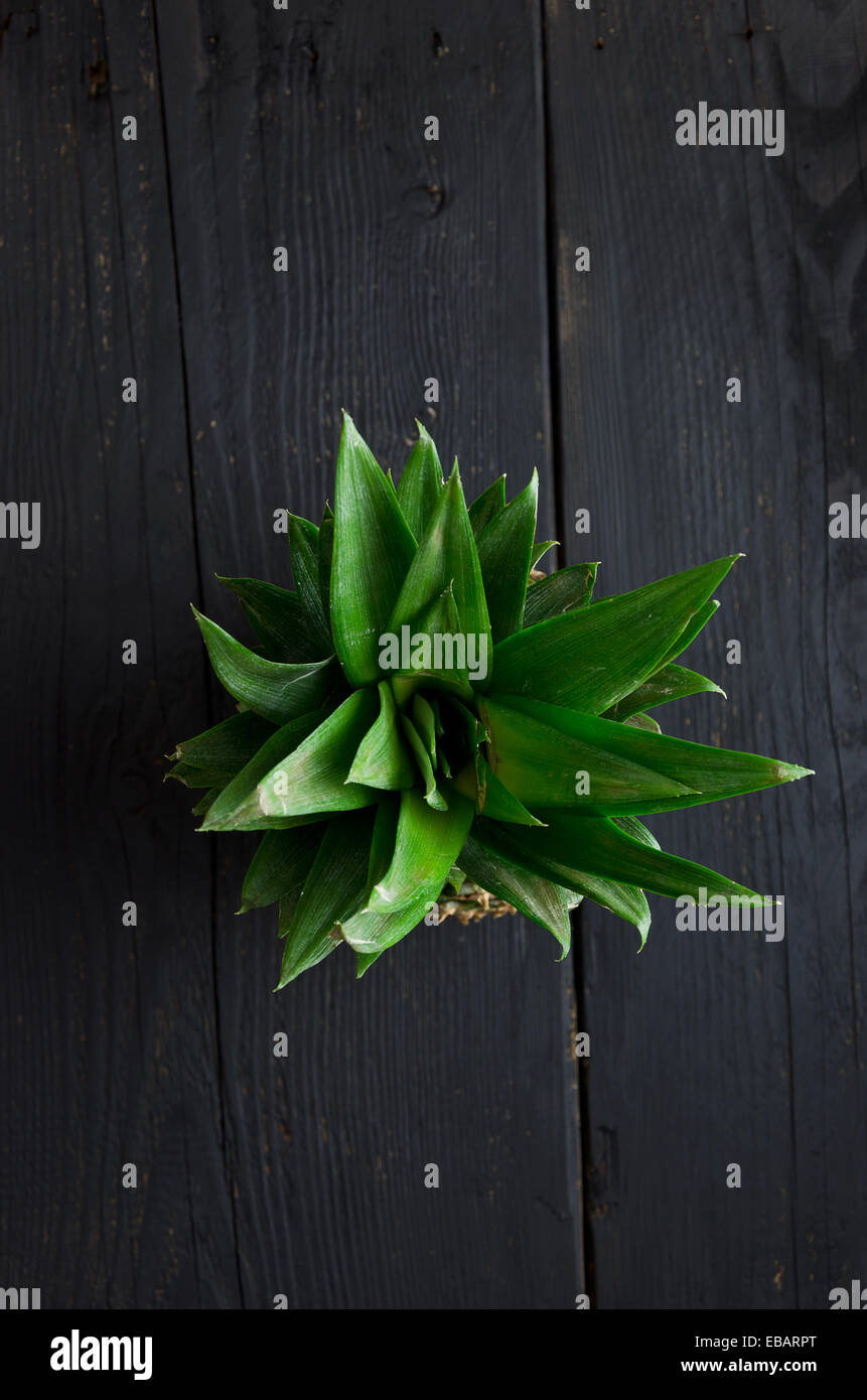 Pineapple leaves over black wooden table - Stock Image