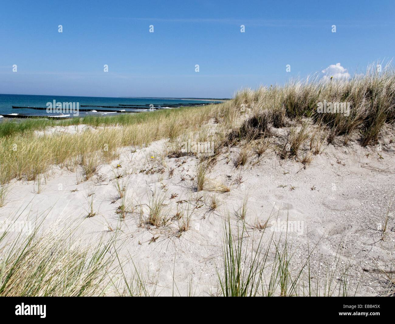 Baltic Sea beach between body of water breakwater city color image day dune easternmost Europe flora Germany grass - Stock Image