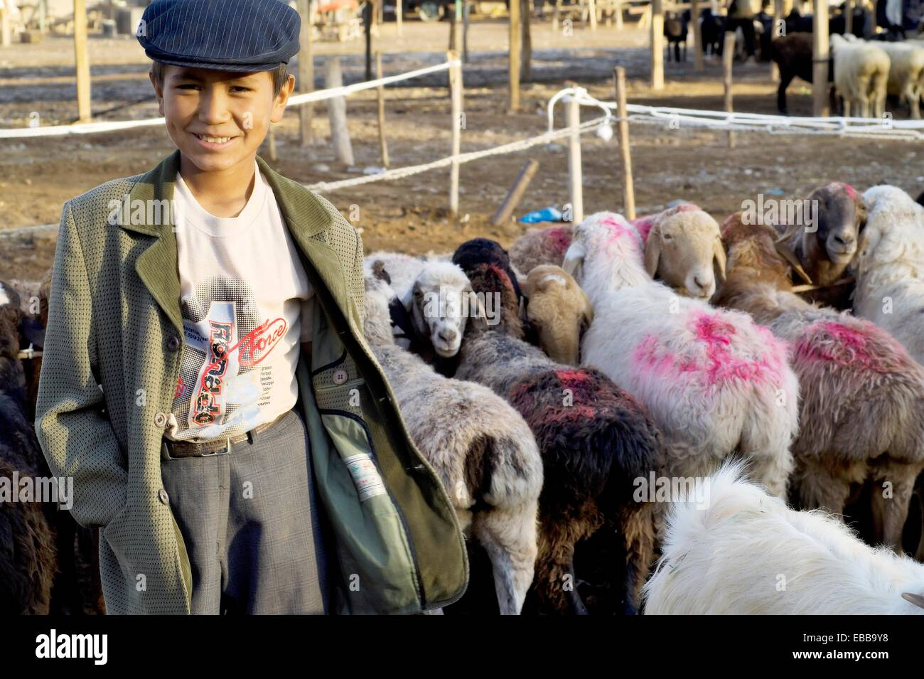 a young uygur shepperd take care of a flock of sheeps on sale at the local livestock market  kashgar  xinjiang  - Stock Image