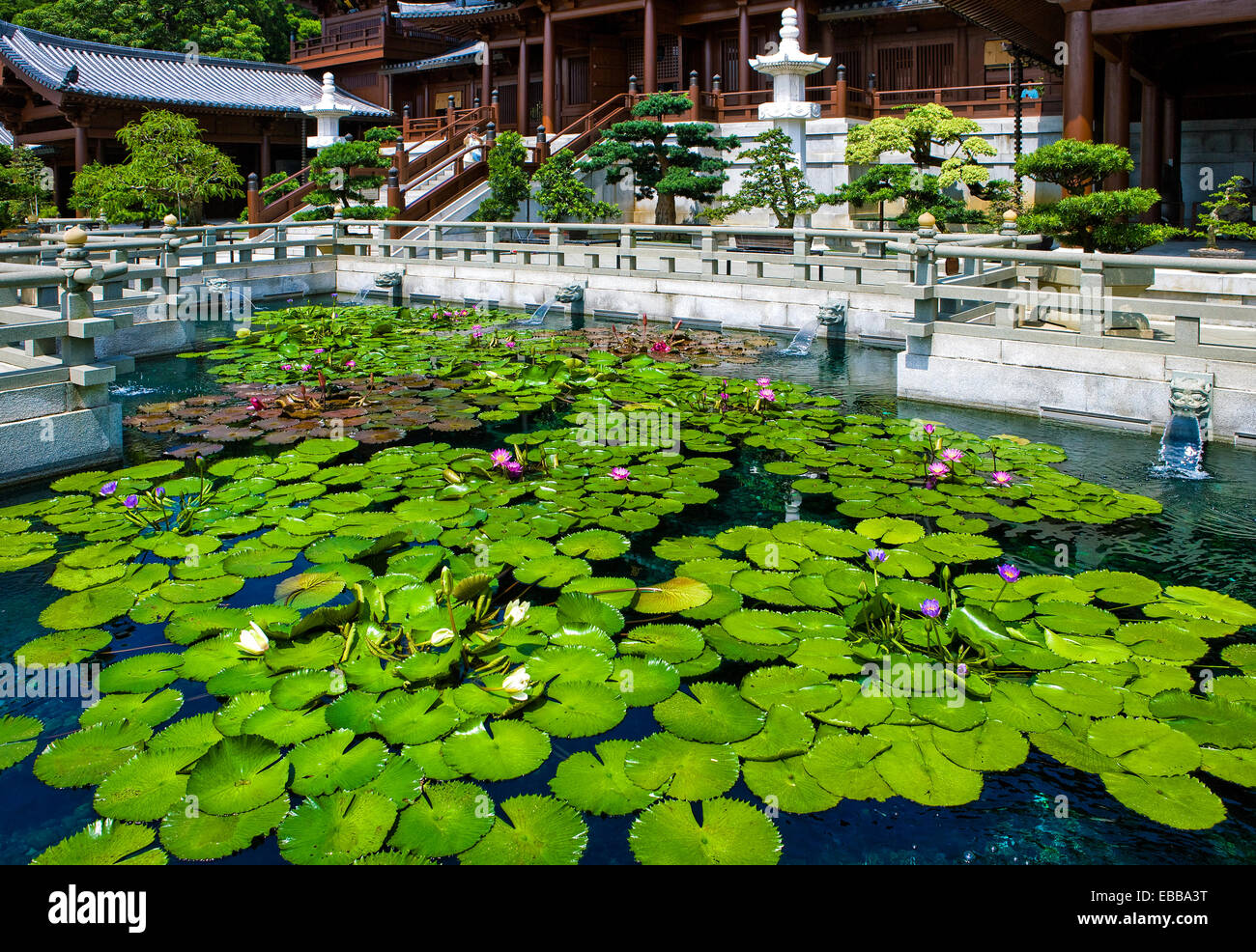 Hong Kong, the pond with flowers of the Chi Lin antique monastry in the new Kowloon quarter - Stock Image