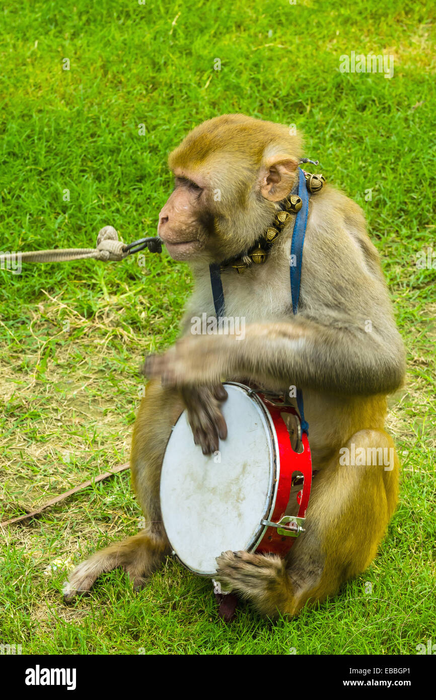 Performing monkeys, Independence Day on the Rajpath, New Delhi, India. - Stock Image