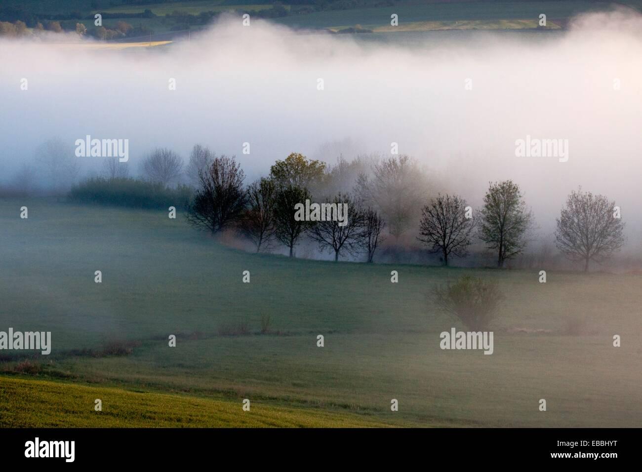 Trees line the bank of the Wörnitz river in morning fog - Region Hesselberg, Bavaria/Germany. Stock Photo