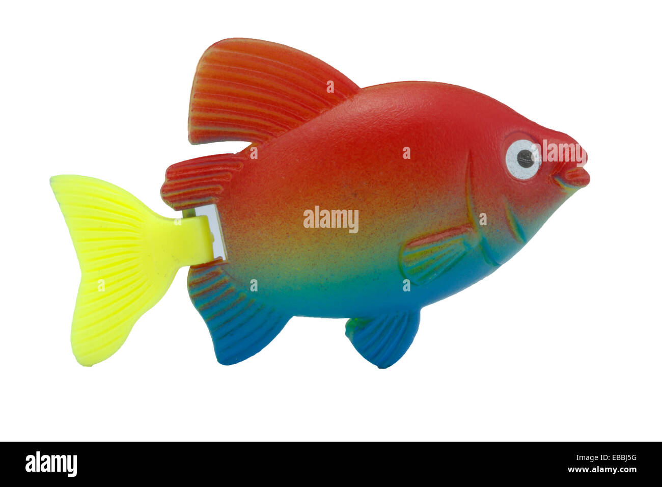 Colorful Fish White Background Stock Photos & Colorful Fish White ...