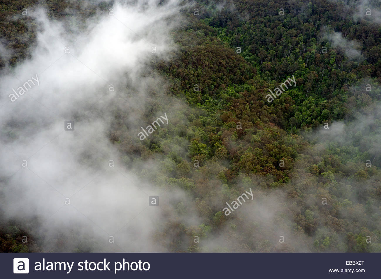 Low clouds above the tree canopy in the Jamison Valley in the Blue Mountains National Park, near Katoomba, NSW, - Stock Image
