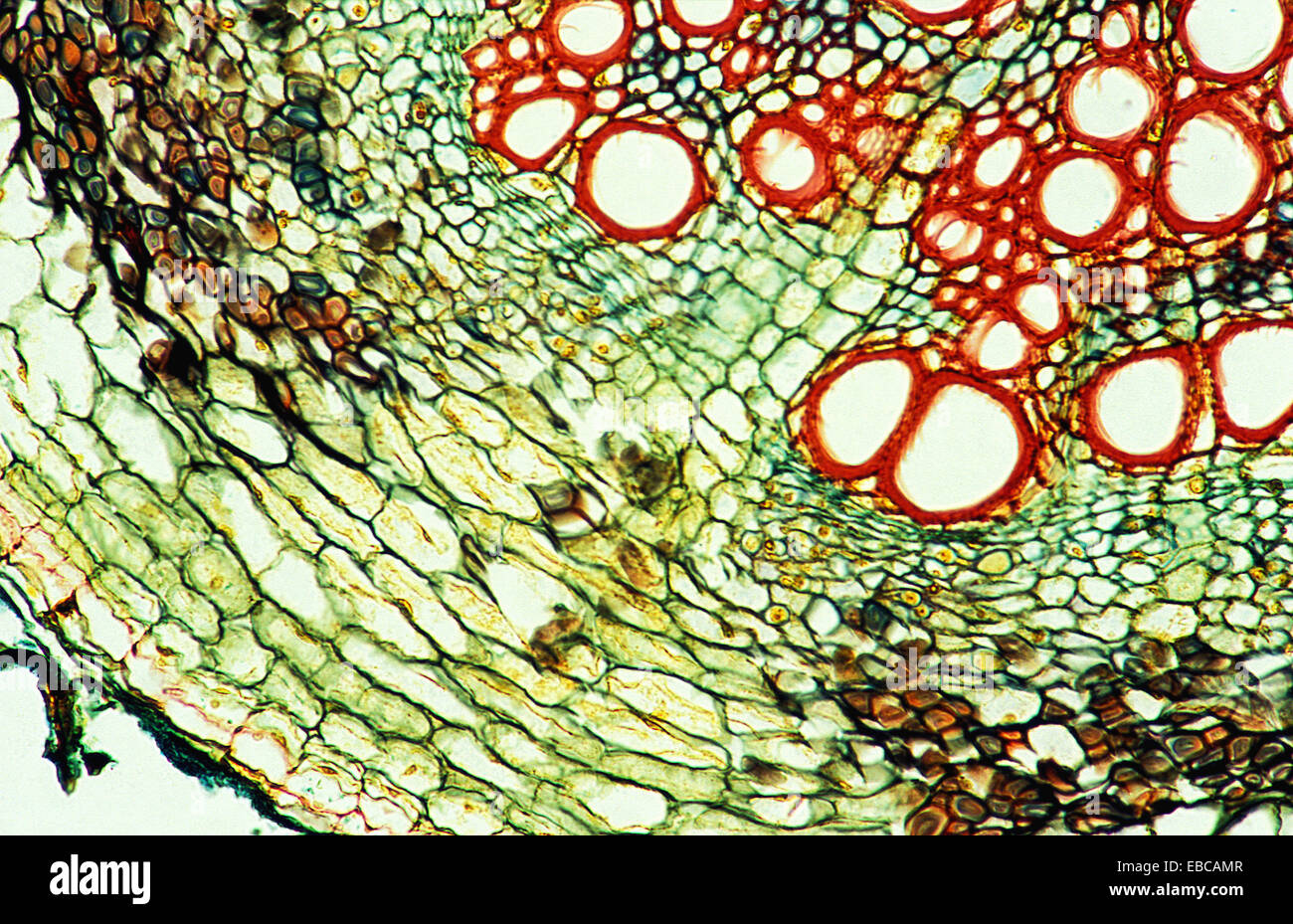 200 anatomy backgrounds biology botany bubble cell close-up color ...