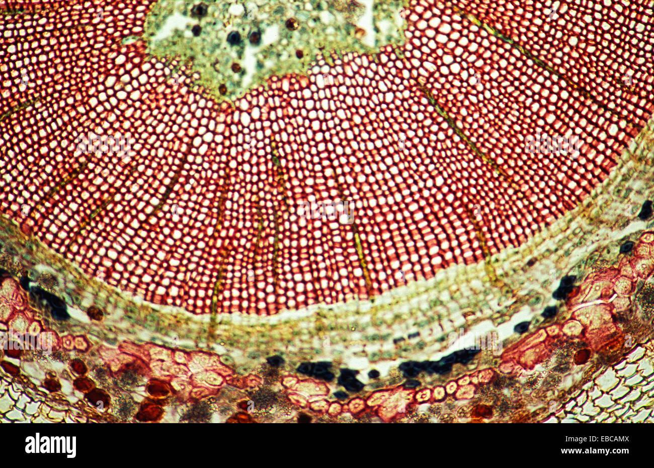 100 anatomy backgrounds Biloba biology botany bubble cell close-up ...