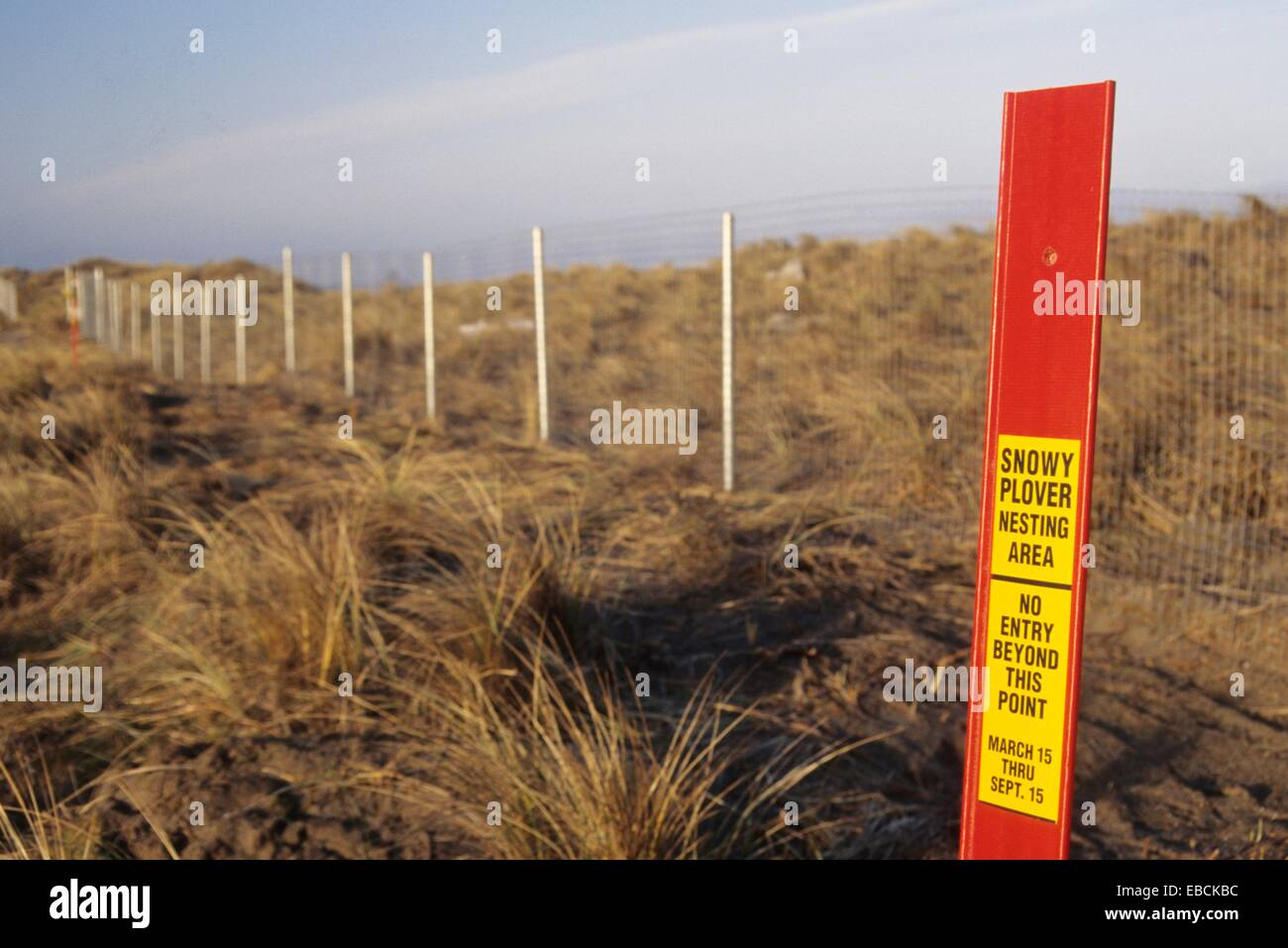 Beach closure signs for snowy plover, New River Area of Critical Environmental Concern, Coos Bay District Bureau - Stock Image
