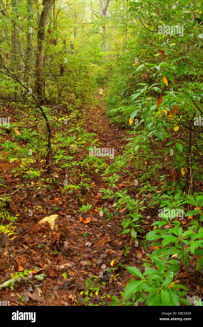Crossover Trail, Pachaug State Forest, Connecticut - Stock Image