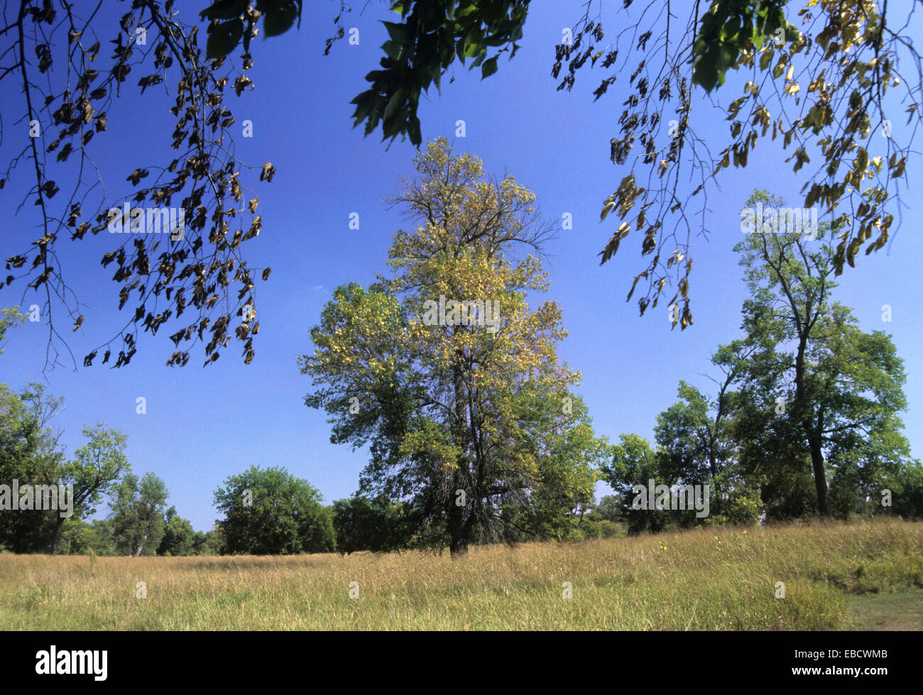 Transition meadow, Adams Homestead & Nature Preserve, Sioux City, Iowa. - Stock Image