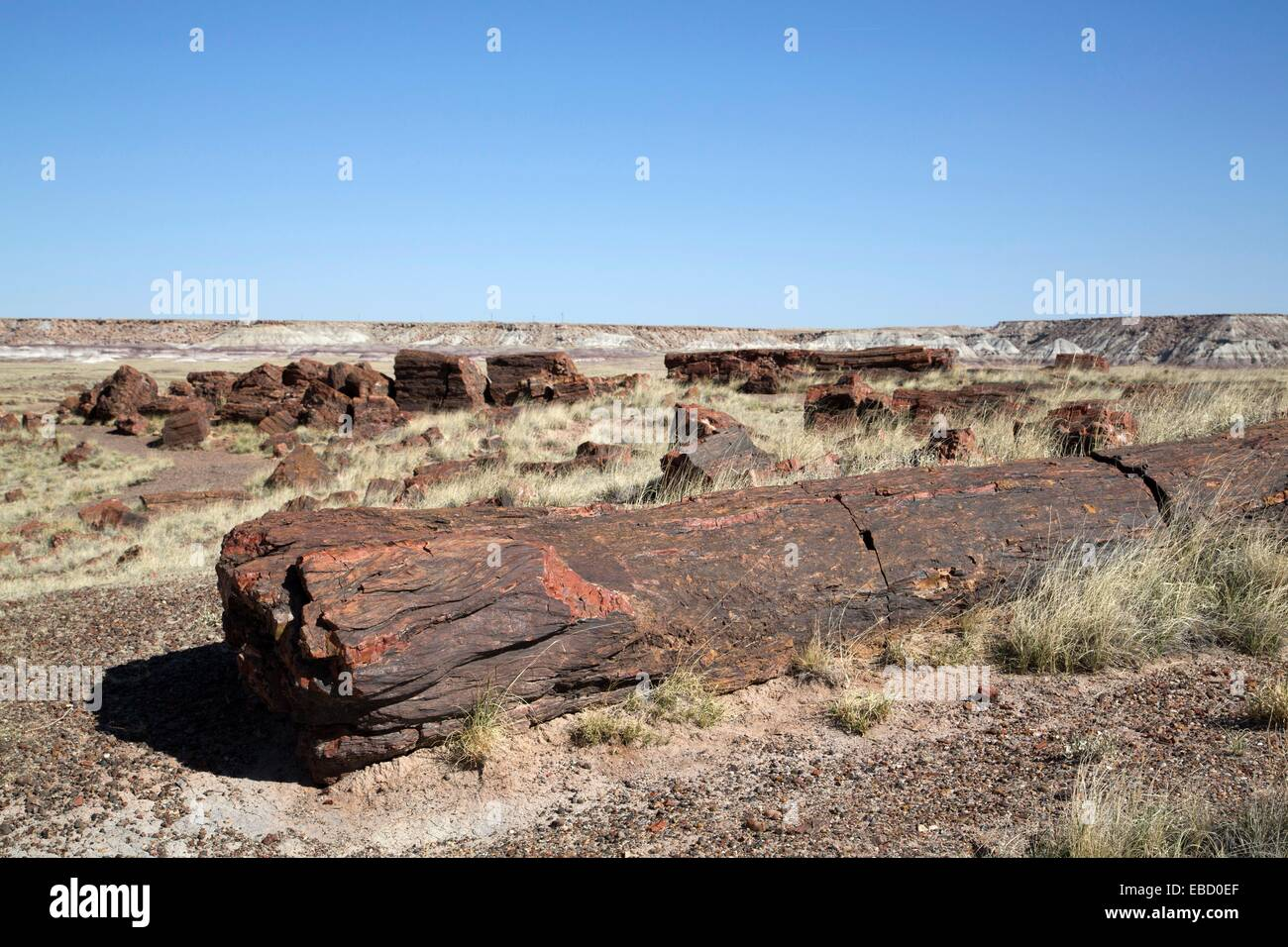1e+6 225 ago America Arizona color image copy space fossil geology horizontal landscape late log Long Logs Mesozoic Stock Photo