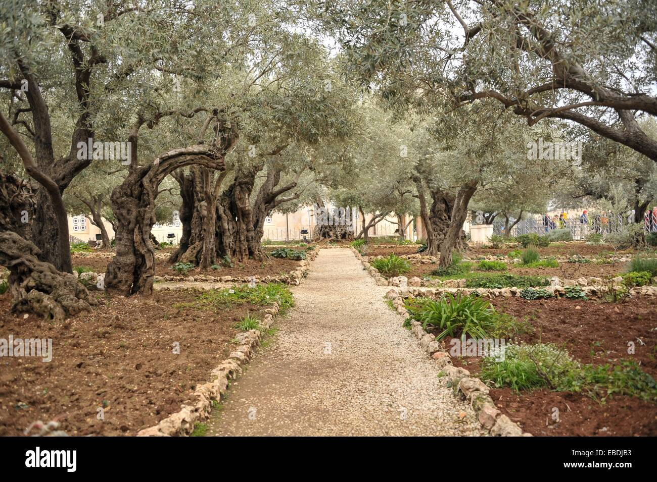 Israel Jerusalem Mount Of Olives Garden Of Gethsemane Stock Photo Alamy