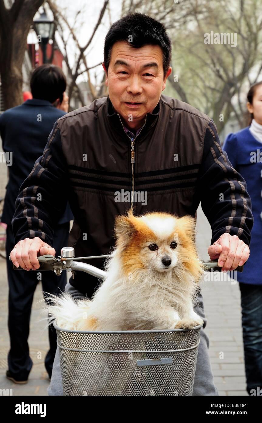 Man with dog in a bycicle, Nan Lou Gu Xiang Hutong, Beijing, China, Asia - Stock Image