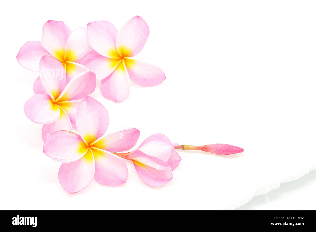 Pink plumeria flower with a white towel in spa condition stock photo pink plumeria flower with a white towel in spa condition mightylinksfo