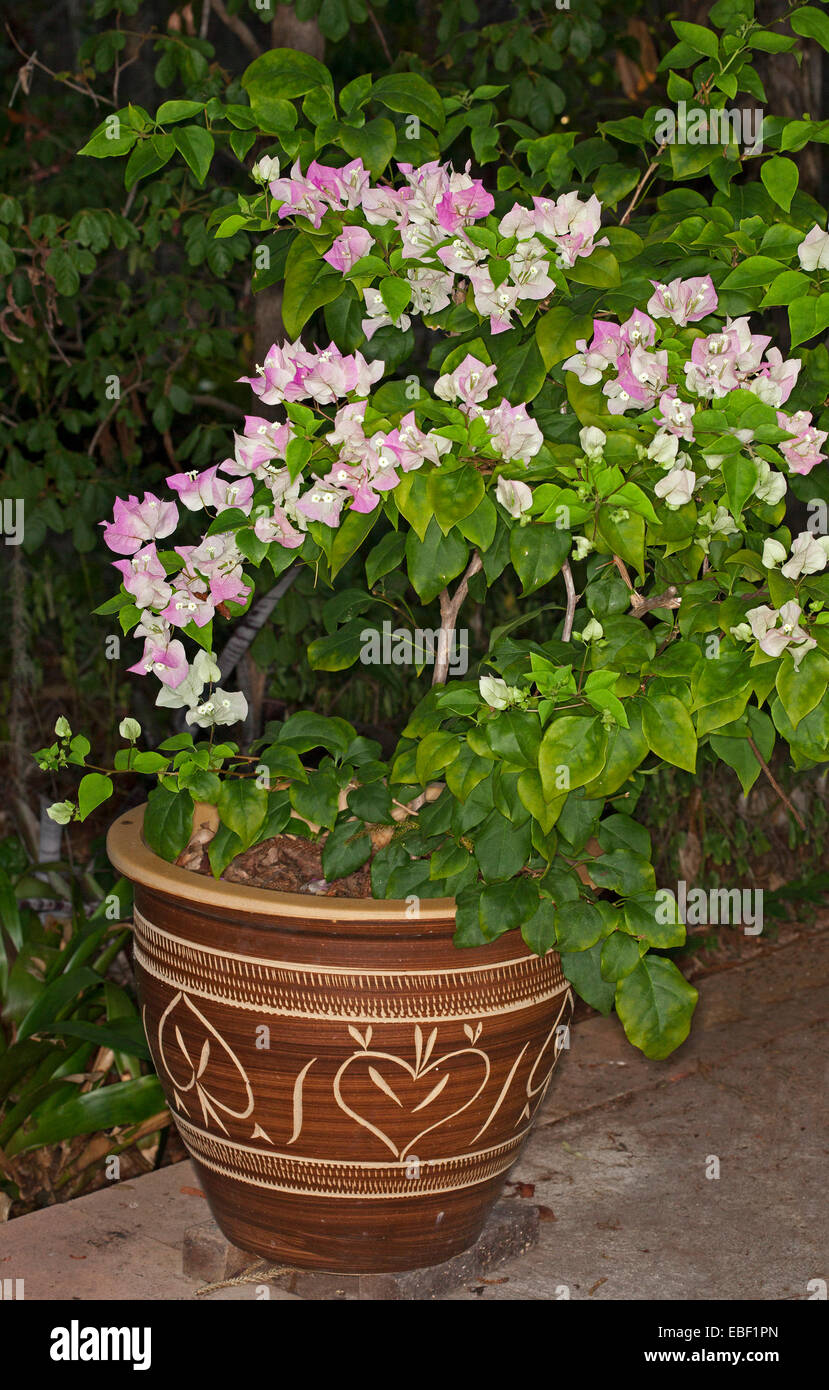 Clusters Of Delicate Pink White Flowers Bracts Emerald Leaves