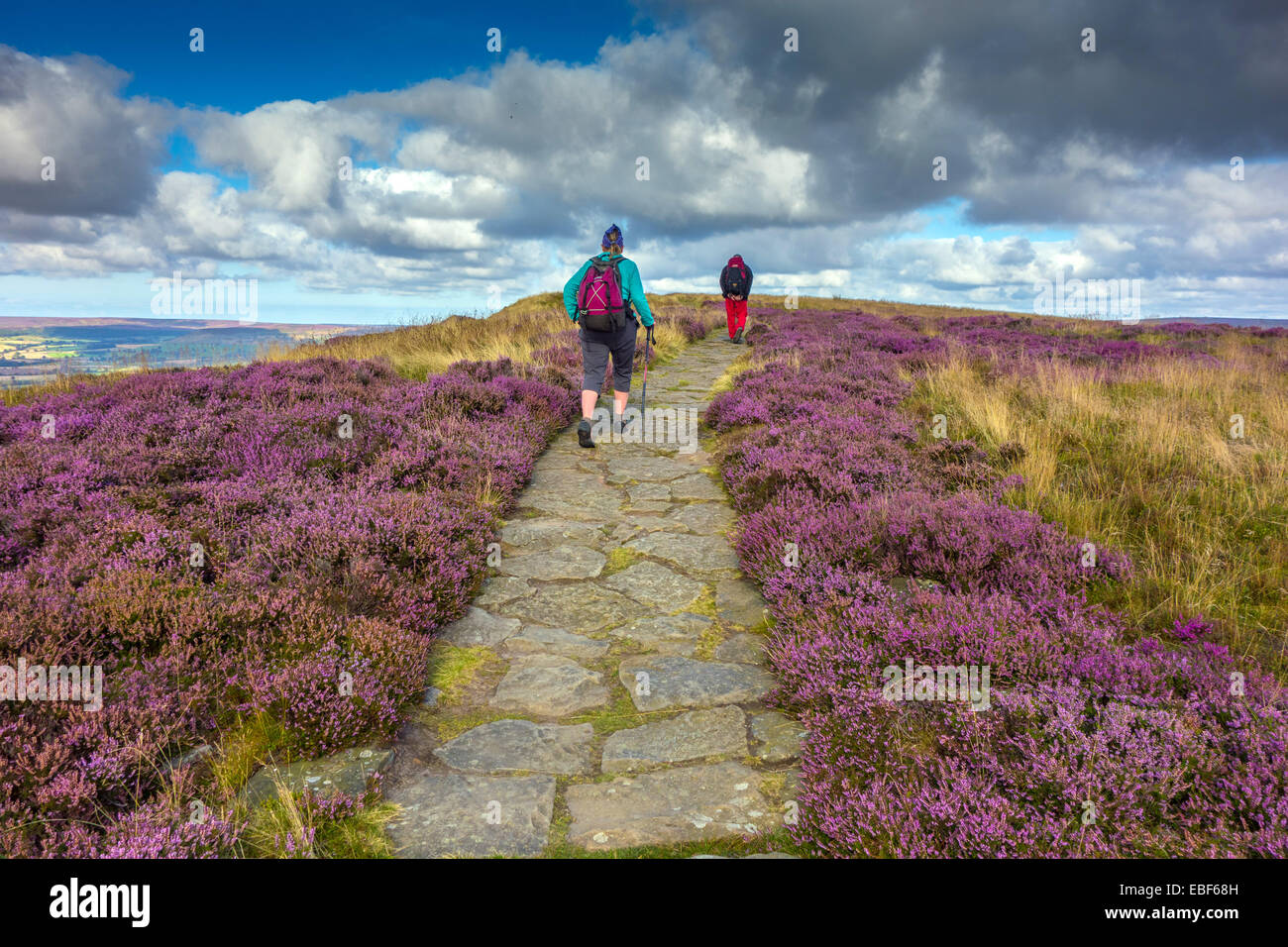 Walker on Cleveland Way, North York Moors - Stock Image