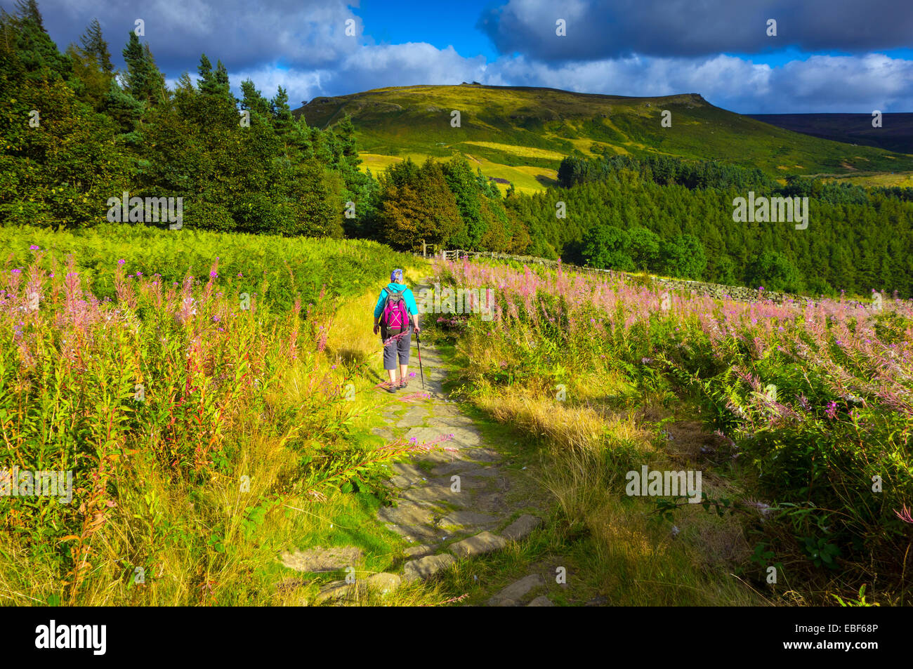 Female Walker with rucksack on Cleveland Way, North York Moors, Yorkshire, UK - Stock Image