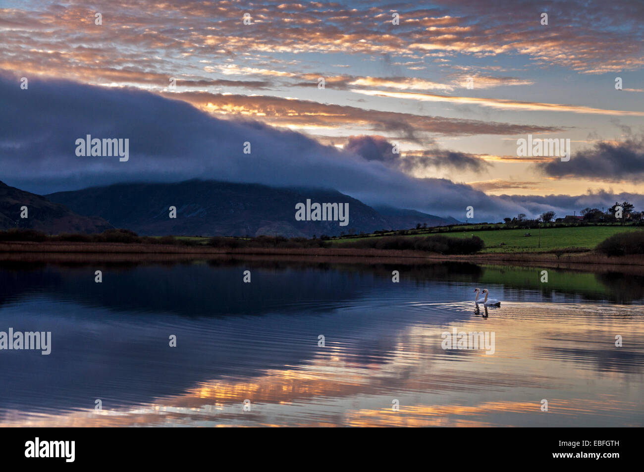 Lake Shanaghan, Ardara, County Donegal, Ireland. 30th November, 2014. Two swans on one of Donegal's many lakes - Stock Image