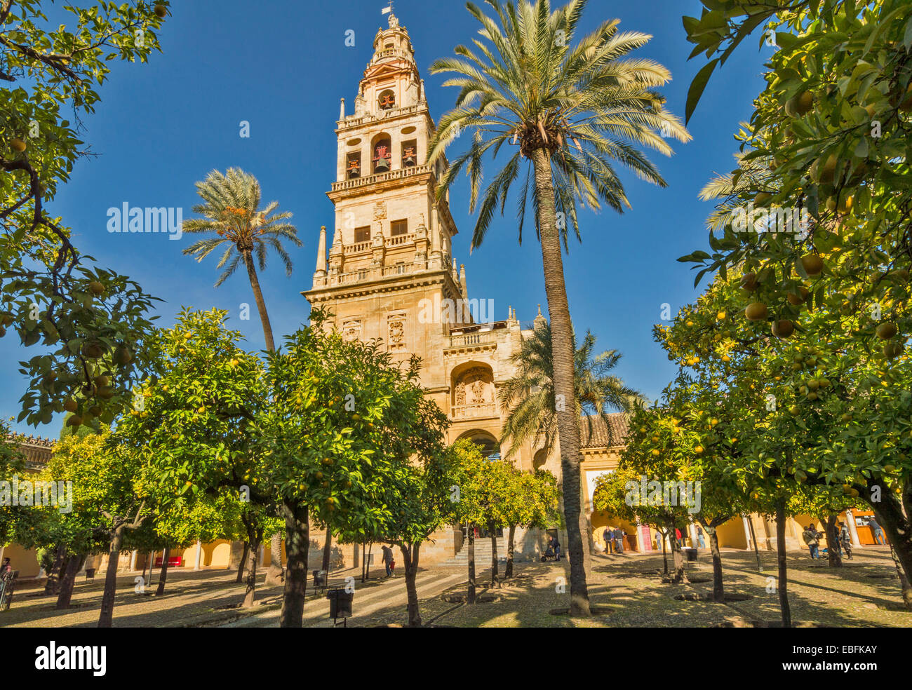 MOSQUE CATHEDRAL OR MEZQUITA CORDOBA  THE MAIN TOWER AND BELLS WITH ORANGE TREES IN A COURTYARD - Stock Image