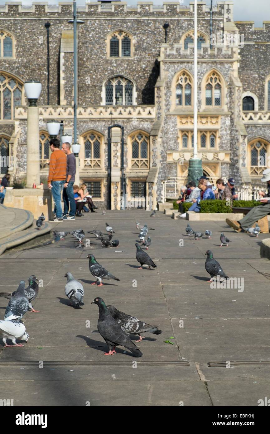 Feral Pigeons scavenging for scraps near the Shirehall, Norwich, Norfolk. - Stock Image