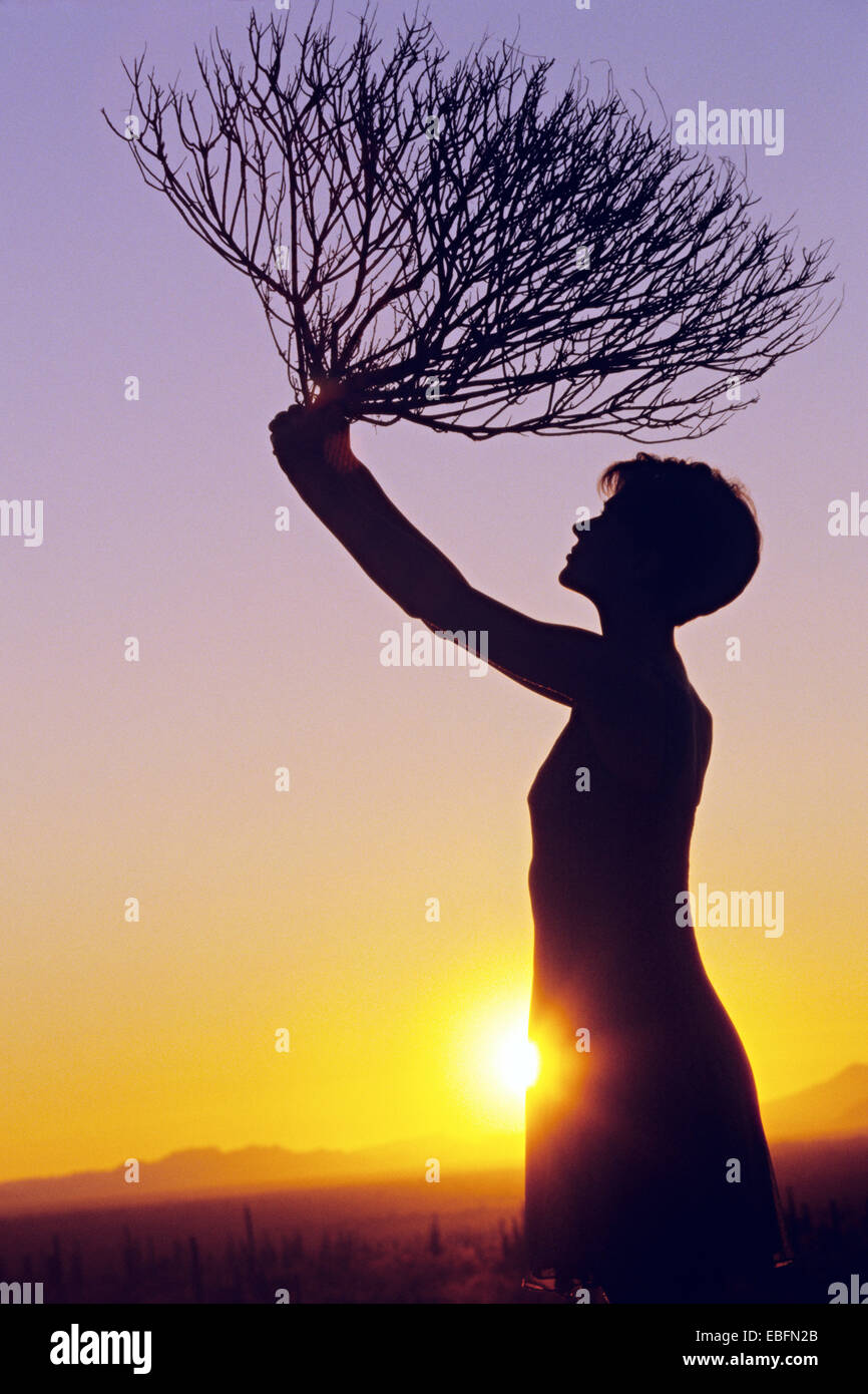 Woman holding sagebrush, Sunset, Sonoran Desert, Arizona - Stock Image