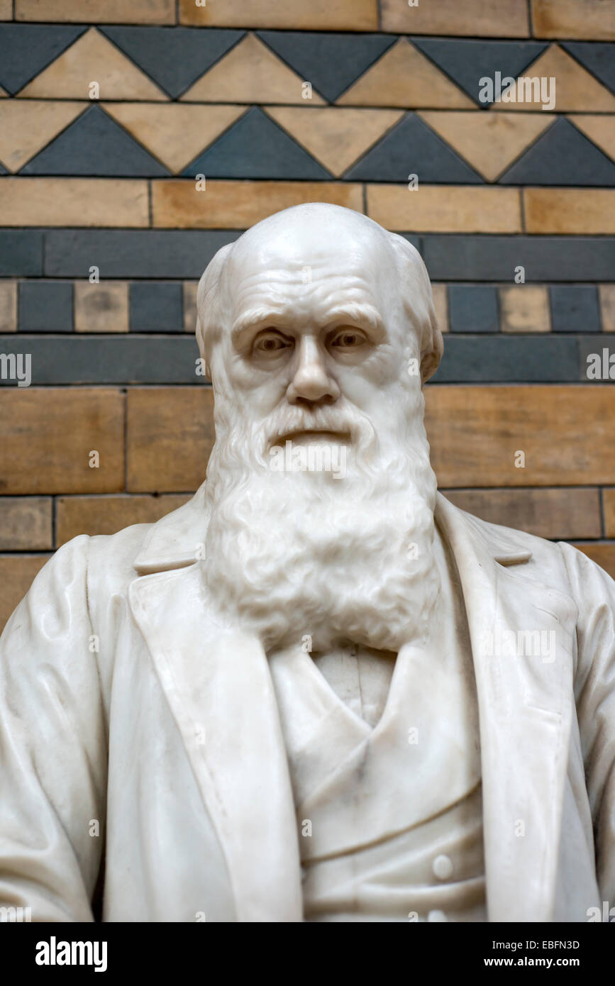 Statue of naturalist and geologist Charles Darwin at the Natural History Museum, London, England, UK - Stock Image