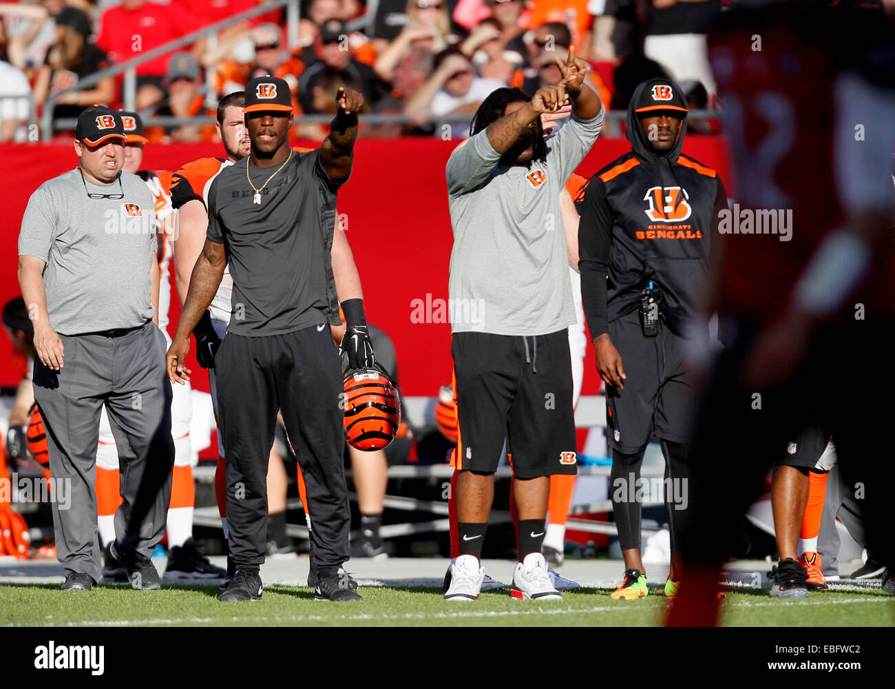 Tampa, Florida, USA. 30th November, 2014. The Cincinnati Bengals sidelines erupts as they try to signal that there Stock Photo