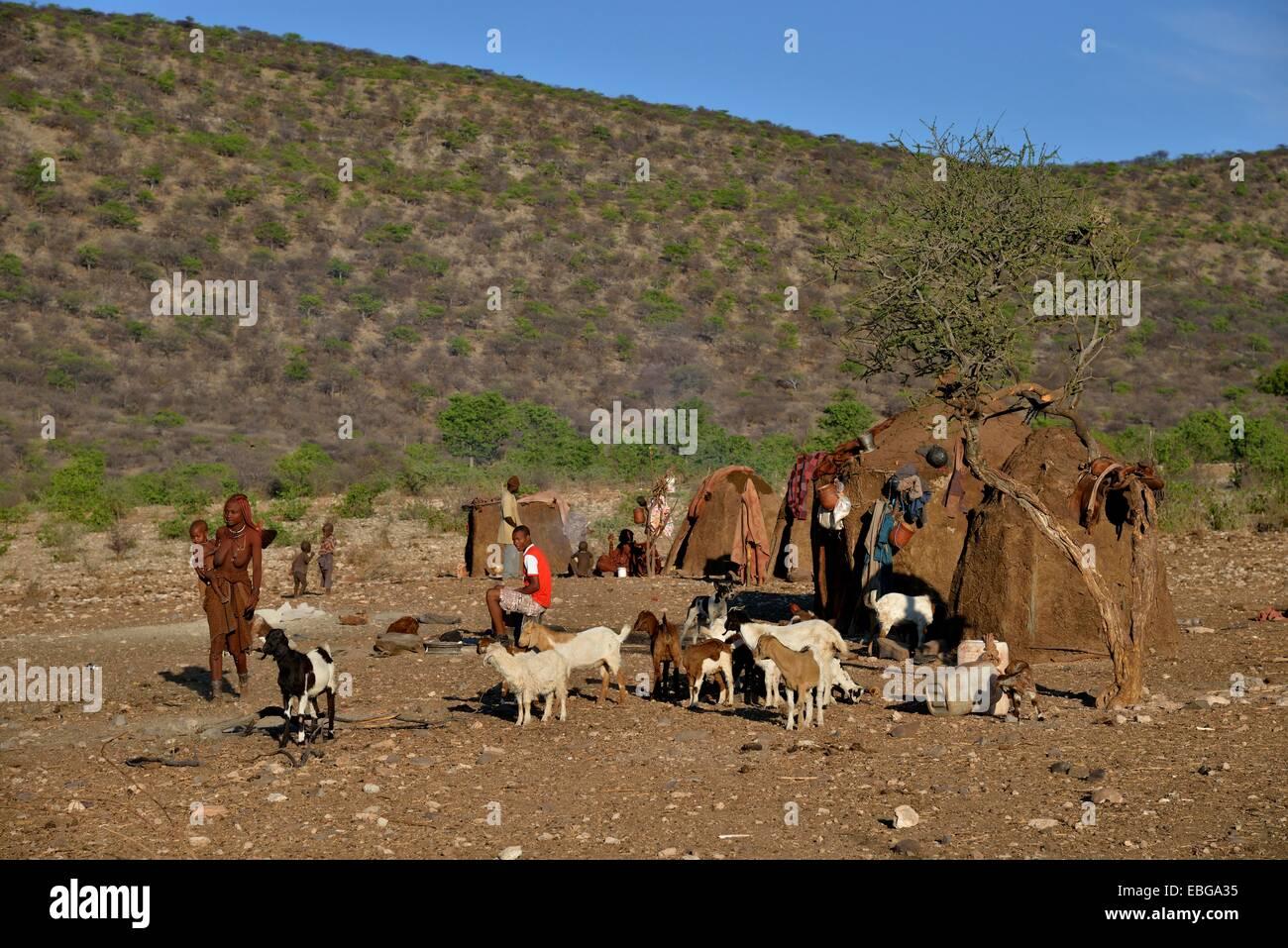 Himba people with goats in front of Himba huts, Ombombo, Kaokoland, Kunene, Namibia - Stock Image